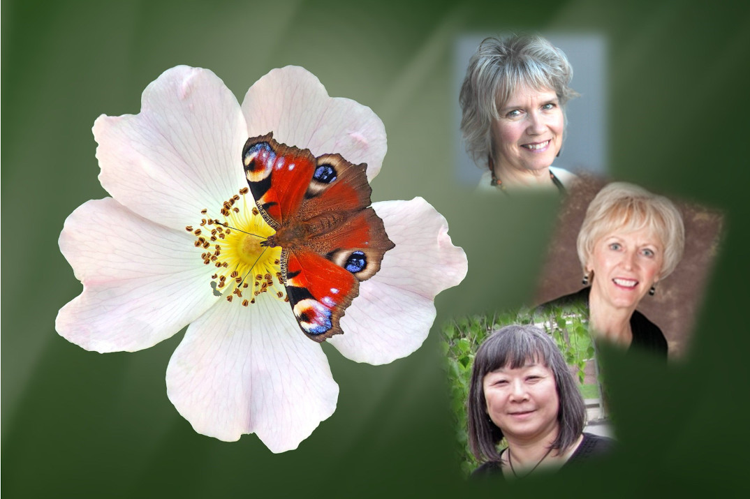 naomi cloutier, catharine dochstader, and sally arai superimposed on a photo of a butterfly landing on a flower